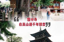 日本高山国分寺,千年银杏与古刹交相辉映
