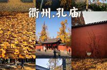 来衢州孔庙,看银杏铺一地金黄……