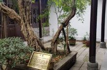 鄂豫皖革命根据地旧址院内的石榴树