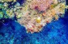 好想那片海——不能出去浮潜😟,看看照片存货,遥想布纳肯岛陆上水下的一切都那么原始而美好❤