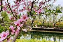 春花扮静公园