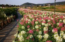 拈花湾,花的世界,花的海洋…