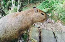 在亚马逊拍到的那些小动物,真心好可爱!尤其那个小猴子,还没我的手掌大呢[Like][Like]