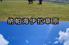 香格里拉·纳帕海伊拉草原 云南拍照游玩攻