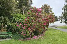 春天的金门公园就是一个大花园,好好享受大自然的美好和惬意!