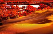 南疆的沙漠了解一下!
