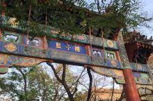 国子监孔庙的紫藤花语