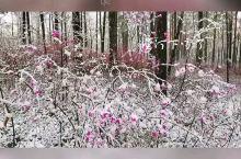 五月穿上棉衣棉裤带您看雪