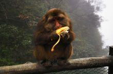 #旅行家派对 [Joyful]眉山派调皮的猴子