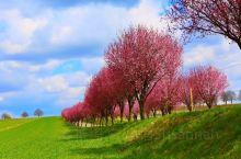 匈牙利的春天
