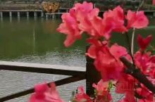 春暖花开,波光粼粼,鸟雀欢唱
