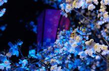 无锡 拈花湾,灯光下的樱花夜色