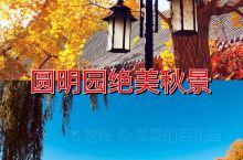 圆明园遗址公园绚烂秋景
