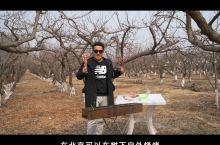 北京这里树下烧烤,两厅内铜锅涮肉