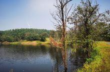 东海县的旅游资源并不太丰富,这个森林公园算是比较不错的。