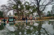 草坪村传统民居为广府民居。现存90座。现存宗祠有3座。云谷林公祠,始建于清代,占地面积250平方米,