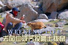 不一样的西藏旅行去冈仁波齐喂土拨鼠吧