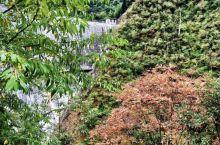 景区内多是森林峡谷,茫茫林海,植被茂盛。植物资源丰富,郁郁葱葱,满眼绿色。尤其是下过雨后,云雾缭绕,