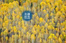 """站在金色北疆连打一个喷嚏都是""""爱秋"""""""