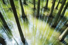 上千亩的水上森林,就在临安青山湖,美极了