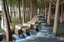 青西郊野的水上森林