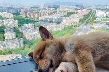 南京南站旁空中花园  最美高层景观公寓