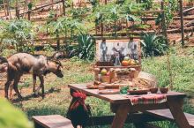 IRIS FARM 农场体验