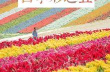 北海道旅行·美瑛必去景点四季彩之丘赏花海
