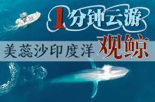 【1分钟云游】04斯里兰卡出海观鲸