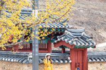 韩国旅行 没想到韩国的寺庙也这么美