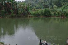 我前两天去采访音乐电影《龙州媚》MV的拍摄,在龙州县八角乡菊功屯往山上走,发现山脚有个湖,这湖有点像