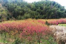 临安玲珑街道米积村的樱花园
