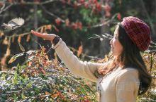 秋日里的多伦多温室花园
