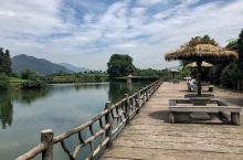 大木山茶园