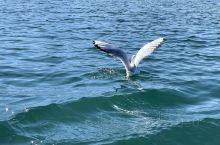 泸沽湖|来自西伯利亚的红嘴鸥