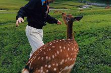 小众旅游地/小鹿/天然氧吧/森林山丘