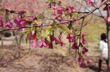 看看,这是樱花,美丽极了,我和小宝!哈哈哈,我喜欢