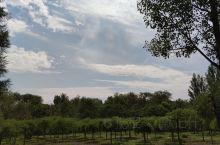 东小口森林公园,适合发呆散步的地方。树很多,就是没有水。