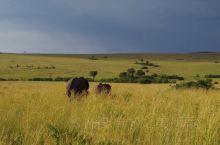 肯尼亚旅游实用小攻略