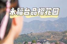 中国最美樱花在哪里?荣登中国国家地理