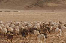 【西藏阿里】北线9天8晚精华段自由行攻略
