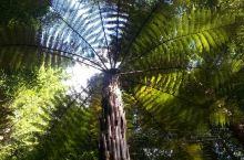 新西兰——罗托鲁瓦红树林~