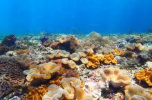 皮皮岛潜水 普吉岛