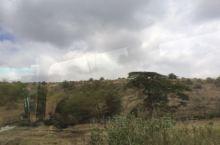 塞伦盖蒂草原,动物大迁徙时去看看吧
