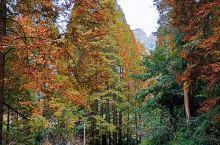 山里的秋天