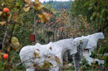 唐乾陵北门遗址,可见五仗马,一石虎,虽均