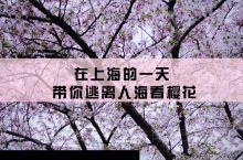 魔都最美樱花车站,南浦大桥赏樱攻略