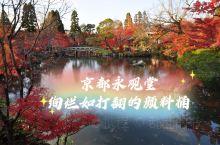 京都红叶季之永观堂及东福寺