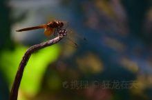 流水潺潺,蜻蜓飞飞。
