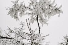 武当山金顶在大雪后出现了难得一见的雾凇,让这个仙境更有仙味